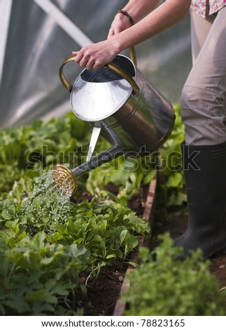 Young woman watering plants in glasshouse close up - stock photo