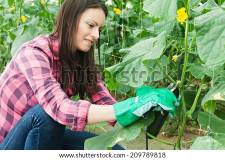 Young woman working in a greenhouse - stock photo