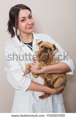 Young women doctor examines a small dog Griffon