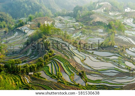 """Yuan Yang Rice Terraces - """"Tiger Mouth"""" under the sunset in yunnan province of China. - stock photo"""