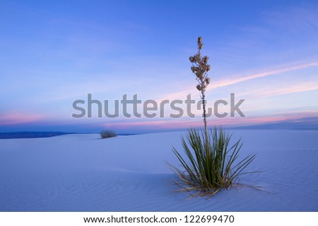 Yucca in twilight, White Sands National Park - stock photo