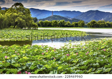 Yue Feng Pagoda Pink Lotus Pads Garden Reflection Summer Palace Beijing China - stock photo