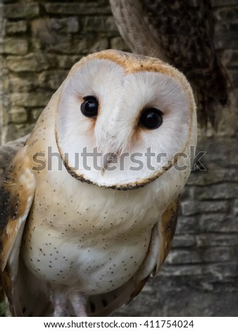 Yufuin FUKUOKA, JAPAN - Apr 10 ,2015 : barn owl's portrait at owl's forest zoo. A natural landmark located at the end of the town. - stock photo