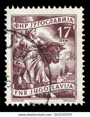 "YUGOSLAVIA - CIRCA 1952: A stamp printed in Yugoslavia shows Livestock raising, inscriptions from series ""Domestic economy"", circa 1952"