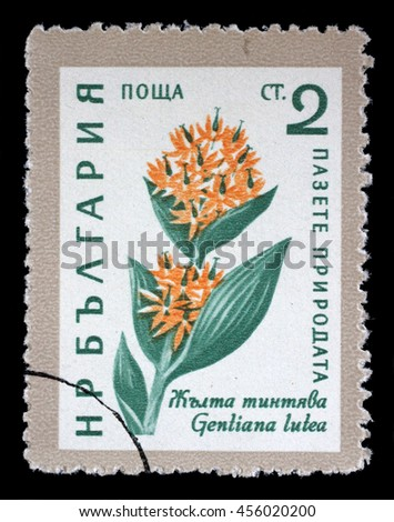 ZAGREB, CROATIA - JULY 03: A Stamp printed in Bulgaria shows Gentiana lutea flower, circa 1961, on July 03, 2014, Zagreb, Croatia - stock photo