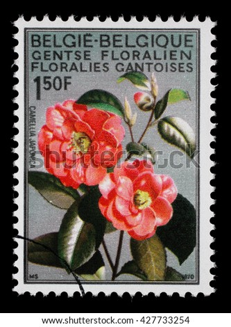 ZAGREB, CROATIA - JULY 03: a stamp printed in the Belgium shows Camellia, Flower, International Flower Exhibition in Gent, circa 1967, on July 03, 2014, Zagreb, Croatia - stock photo
