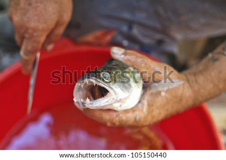 Zander in hand of the fisherman - stock photo