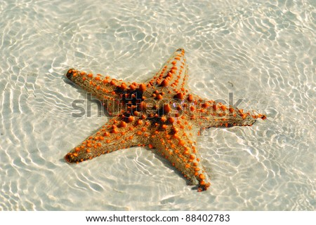 "Zanzibar, Tanzania starfish or sea stars are echinoderms belonging to the class Asteroidea. The names ""starfish"" and ""sea star"" essentially refer to members of the class Asteroidea."