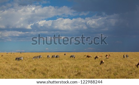 Zebra and antelopes on the plains just before a thunderstorm in Masai Mara National Park, Kenya - stock photo
