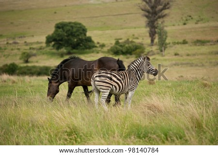 Zebra and Horse in green fields - stock photo