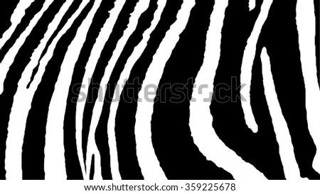 Zebra. Background Zebra. Texture Zebra. The Skin Of a Zebra. Striped skin. Black and white background. Black and white stripes. African motifs. - stock photo