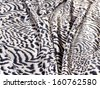 zebra blanket  - stock photo