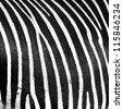 Zebra  closeup background - stock photo