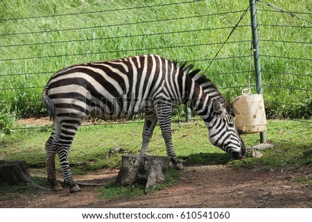 https://thumb1.shutterstock.com/display_pic_with_logo/3039326/610541060/stock-photo-zebra-eating-from-a-feeder-610541060.jpg