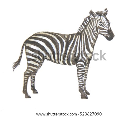 zebra hand painted watercolor on paper