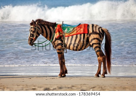 Zebra horse,  fake zebra on the beach against the sea background - stock photo