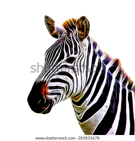 Zebra illustration - stock photo