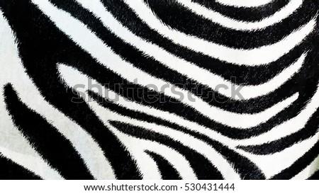 Zebra Patterns