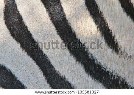 Zebra Patterns of a real life animal - Black and White art and background coming from Africa.  It confuses predators, and stimulates the mind and imagination of mankind.  Wondrous beauty.
