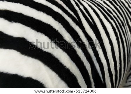 Zebra Stripes Stock Photo 513724006 - Shutterstock