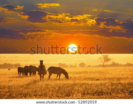 zebras on lake - stock photo