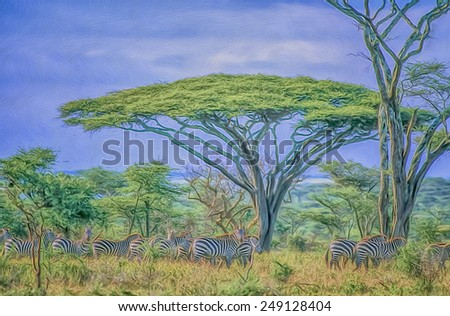 Zebras under acacia tree, digital oil painting - stock photo