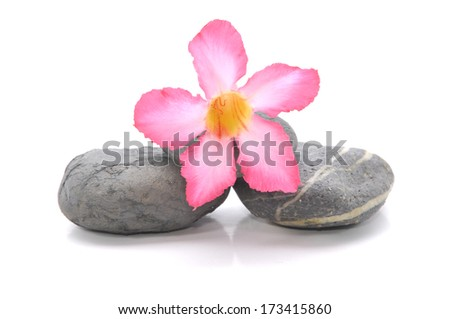 Zen And Spa Stones With Frangipani Flower Over White Background