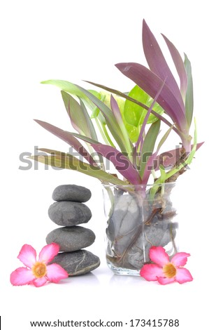 Zen And Spa Stones With Frangipani Flowers And Small Plant In Glass Vase Over White Background - stock photo