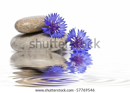 Zen balance with flowers and water. - stock photo