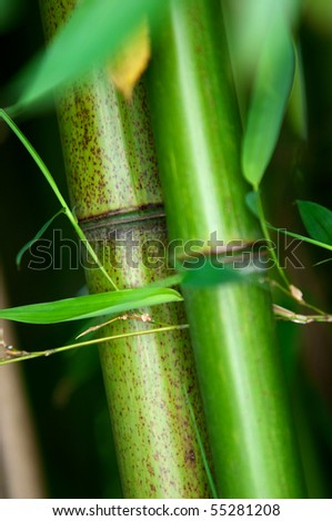 Zen bamboo forest green background - stock photo