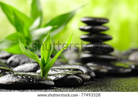 zen basalt stones and bamboo with dew (focus on the bamboo) - stock photo