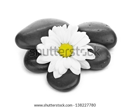 zen basalt stones and daisy isolated on white - stock photo