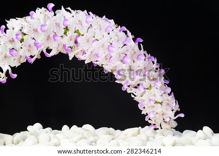 zen basalt stones and orchid isolated on black. - stock photo