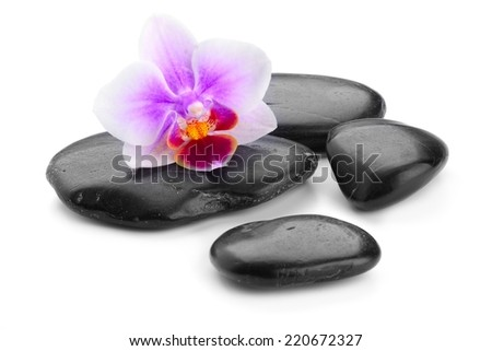 zen basalt stones and orchid isolated on white