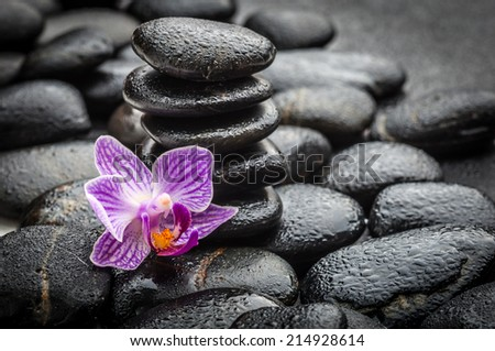 zen basalt stones and orchid on the black  - stock photo