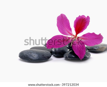 zen basalt stones and pink flower isolated