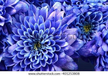 Zen blue flower background : petals circling around heart - stock photo