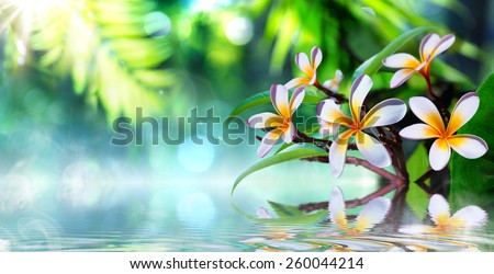 zen garden with frangipani and vapour on water  - stock photo