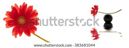 Zen red gerbera header - stock photo