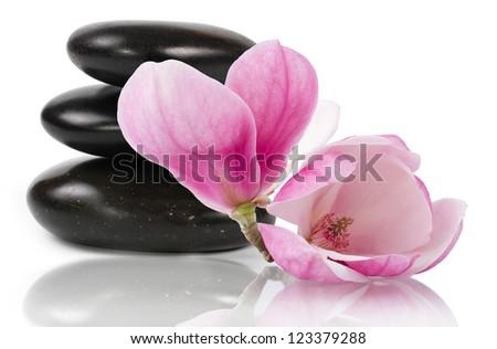 Zen stones and beautifl magnolia flower, white background - stock photo
