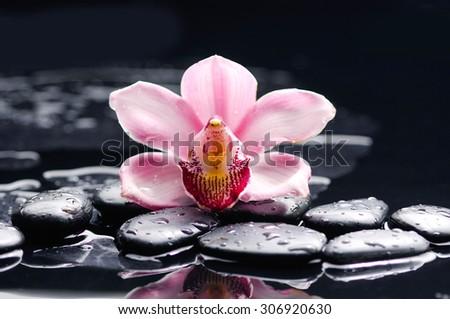 Zen stones and macro of orchid - stock photo