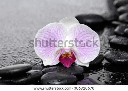 Zen stones and macro of white orchid-wet background - stock photo