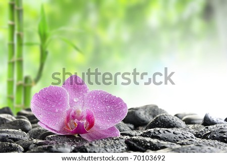zen stones and  orchid in the water - stock photo