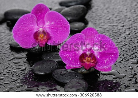 Zen stones and two orchid-wet background  - stock photo