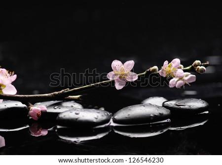 zen stones with cherry blossom - stock photo