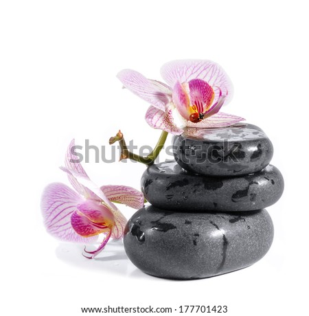 Zen stones with orchid and ladybird. Isolated on white background.