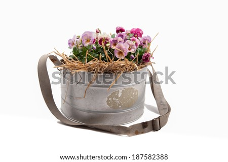 Zinc galvanized basket with pansies - stock photo