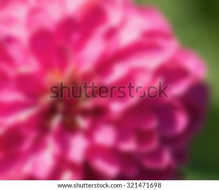 Zinnia flower,closeup of red Zinnia flower in full bloom,Youth-and-old-age flower ,blur - stock photo