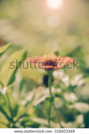 Zinnia flower,closeup of red Zinnia flower in full bloom,Youth-and-old-age flower,vintage ,blur - stock photo