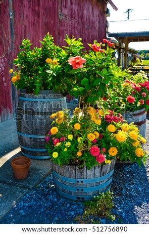 Zinnias and Wine Barrels